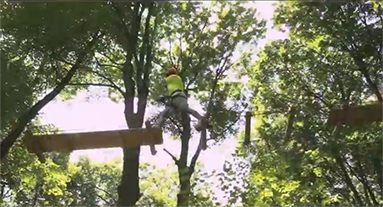people tree topping
