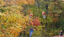 tree topping in fall